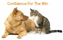confidence cat vs dog
